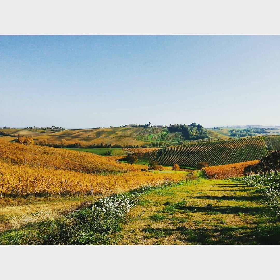 Val Tidone, Piacenza. Valle di viti e vini. ©Annalisa Turolla