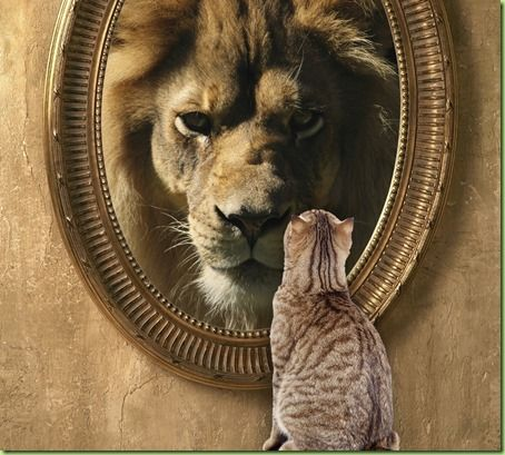 Michelle Obama's Mirror: The Lion In Winter Trumps the Sleepers | Lion cat, Lion, Cool pets