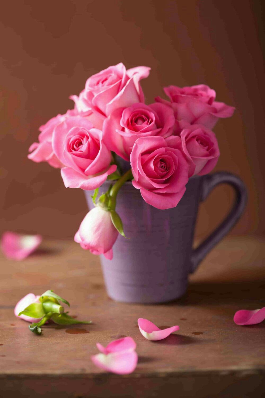 Pink Roses Walpaper Love Rose Flower Beautiful Rose Flowers Rose Flower Wallpaper Flower wallpaper love photo