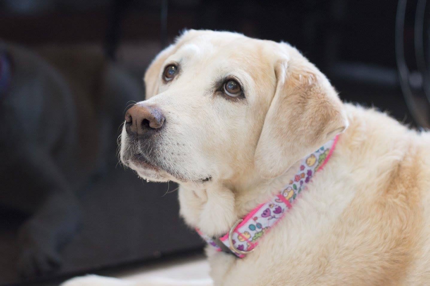 Our Best Selling Collar Buy Here Http Www Headsupfortails Com Huft Tweet Tweet Dog Collar Html Our Pretty Tweet Tweet D Online Pet Supplies Buy Pets Dogs