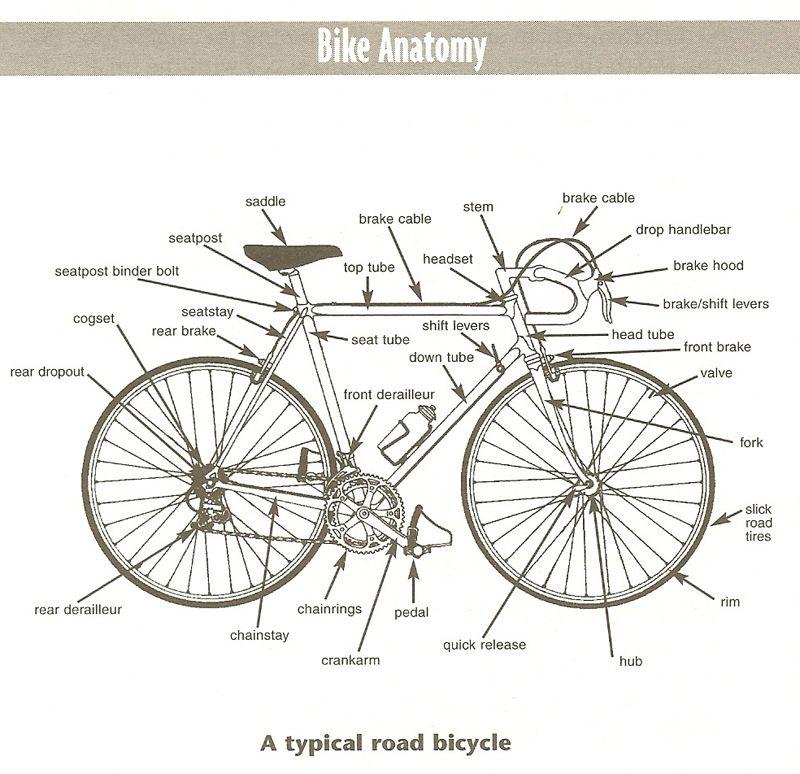Bike Anatomy Swimbikerun Pinterest Anatomy Bicycling And