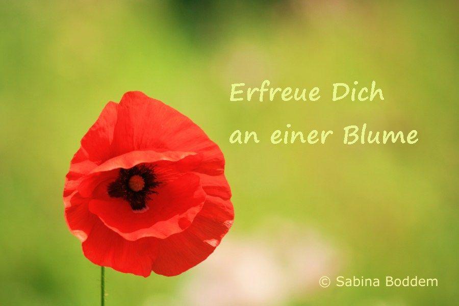 Erfeu Dich an einer Blume! http://www.farben-reich.com/