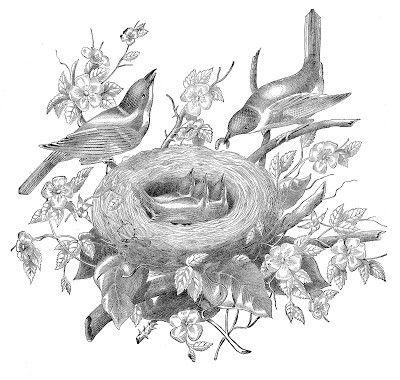 Pin De Denisse Castillo En Laminas Para Transferencias Dibujos De Pajaro Arte De Aves Ilustracion De Ave