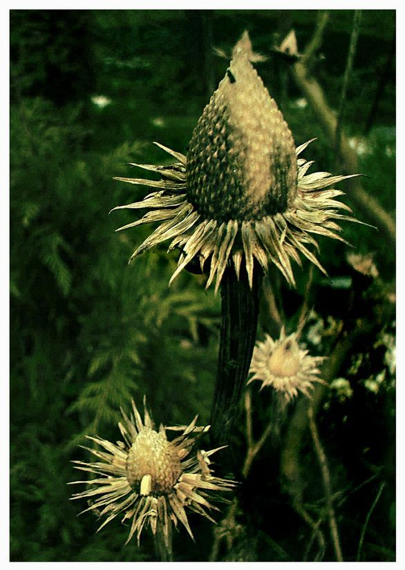 Spiky Garden Flower