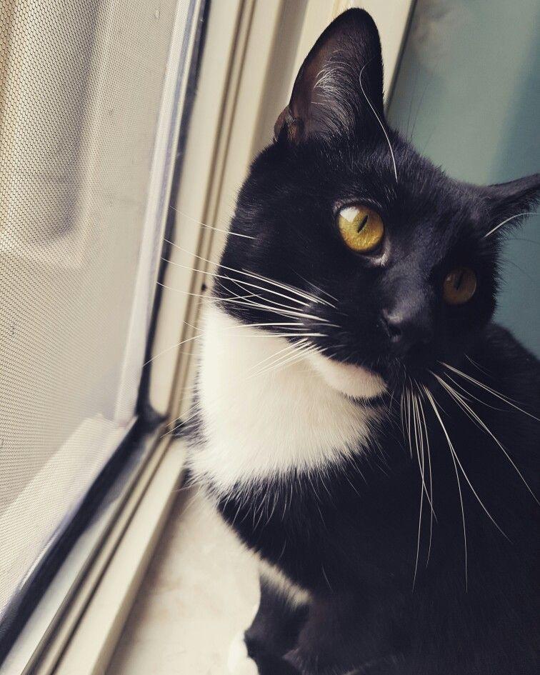 Max  #cat #kitty #catlove