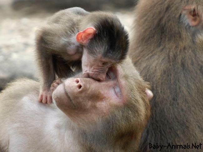 Baby monkey 13     #babymonkey  #cutemonkey   #littlemonkey   #Sweetmonkey   #monkey  #babyanimals  #cuteanimals