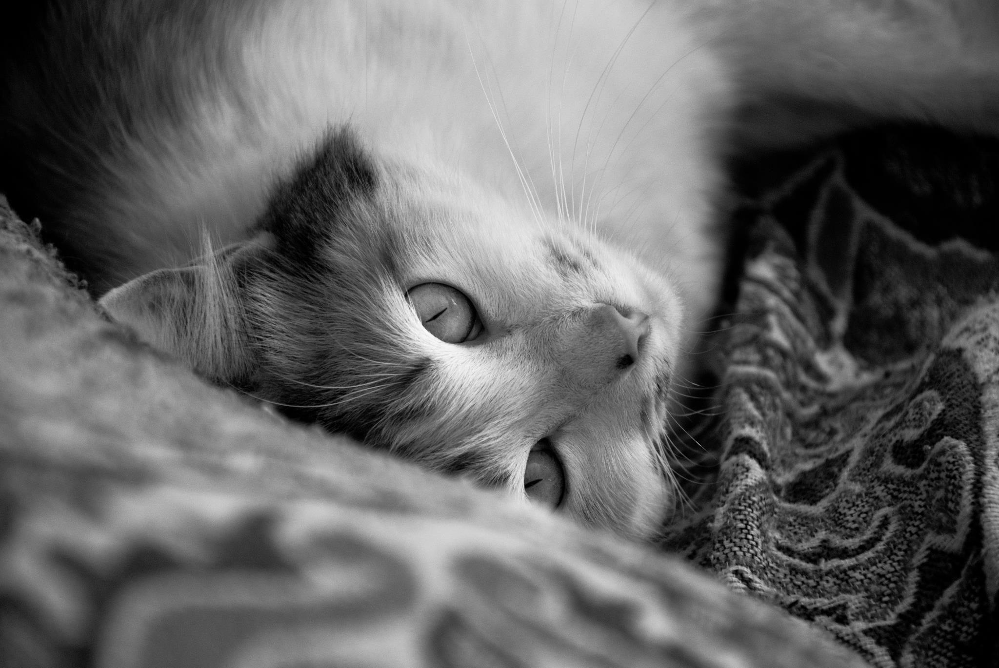 Ela vive pousando para ser fotografada rsrs #cat #Alice #fotografiaPB #petbook