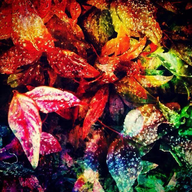 Sparkle Leaves  - SM