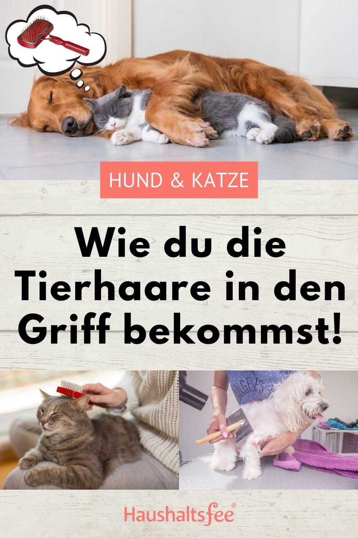 20+ Tierhaare entfernen 8 Tipps für Hund & Katze   Haushaltsfee.org ... Fotos
