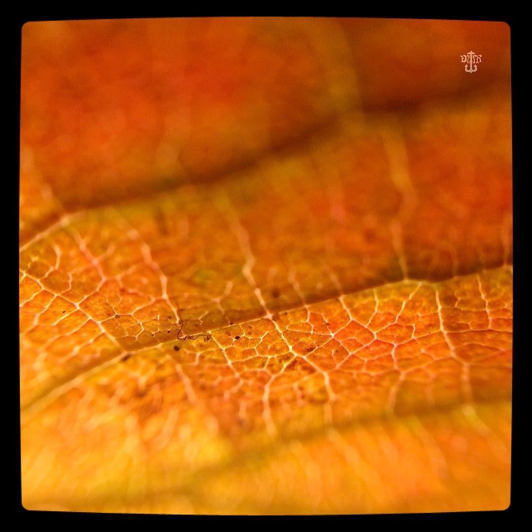 #SH_195 #SH_195_sceris #weeklyscavengerhunt #scavengerhunt #leaf #macro #closeup #autumnleaves Photos from my travels