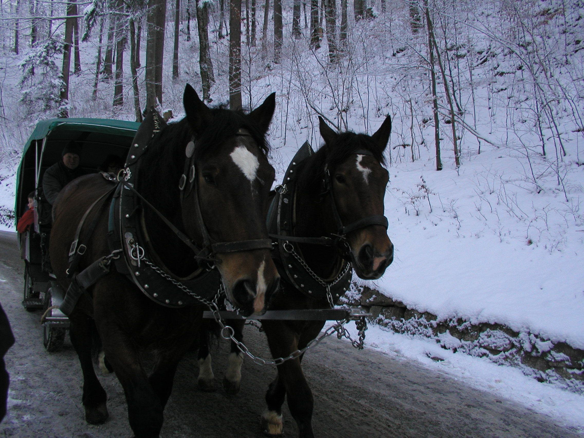 Horsedrawn Carriage rides up to the Neuschwanstein castle.