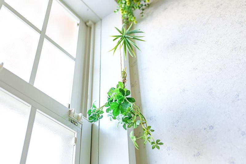 吊り下げて飾る 造花グリーンで夏を簡単に涼しく