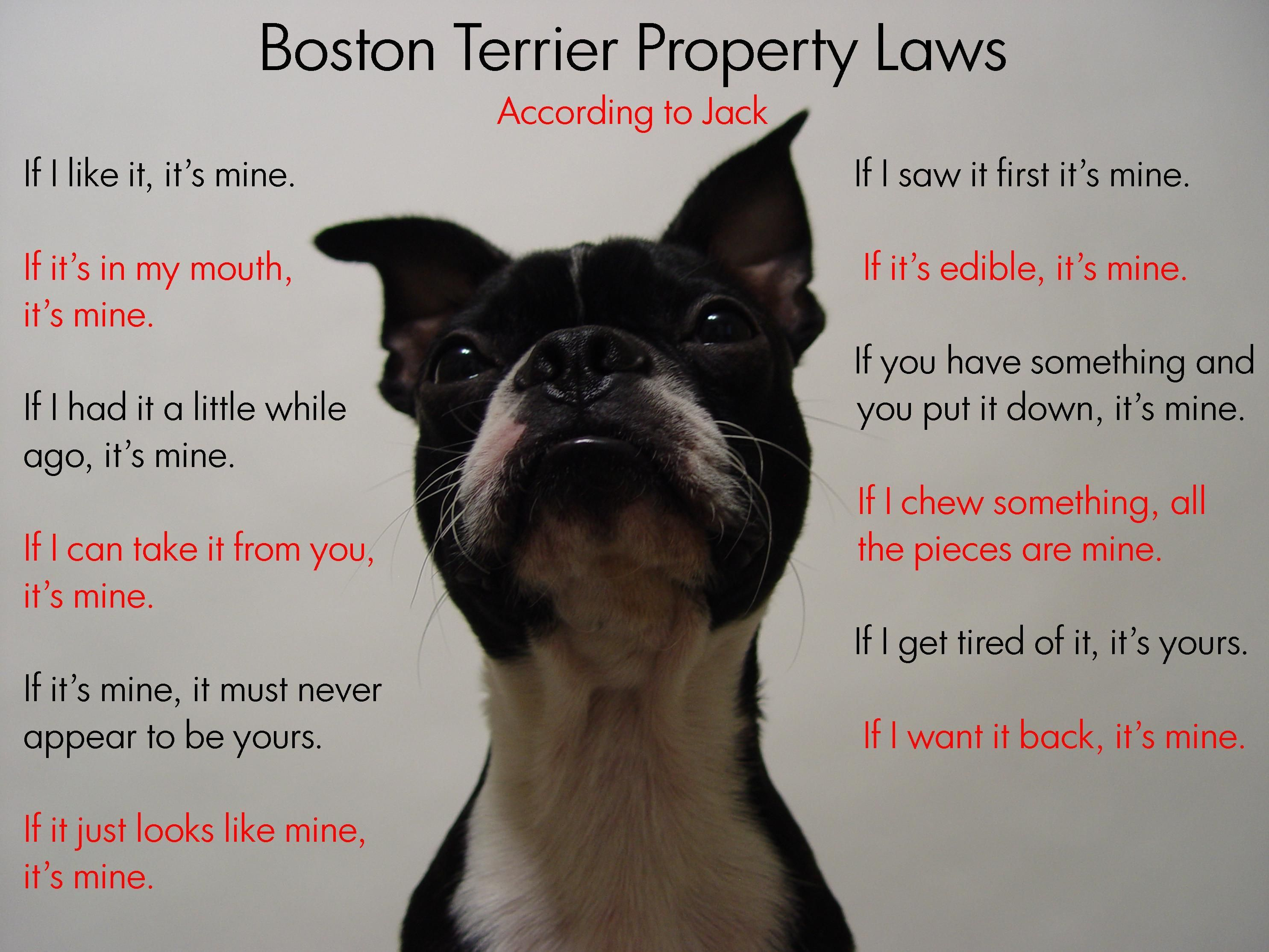 Oct 20 2011 Day 354 Boston Terrier Property Laws Boston