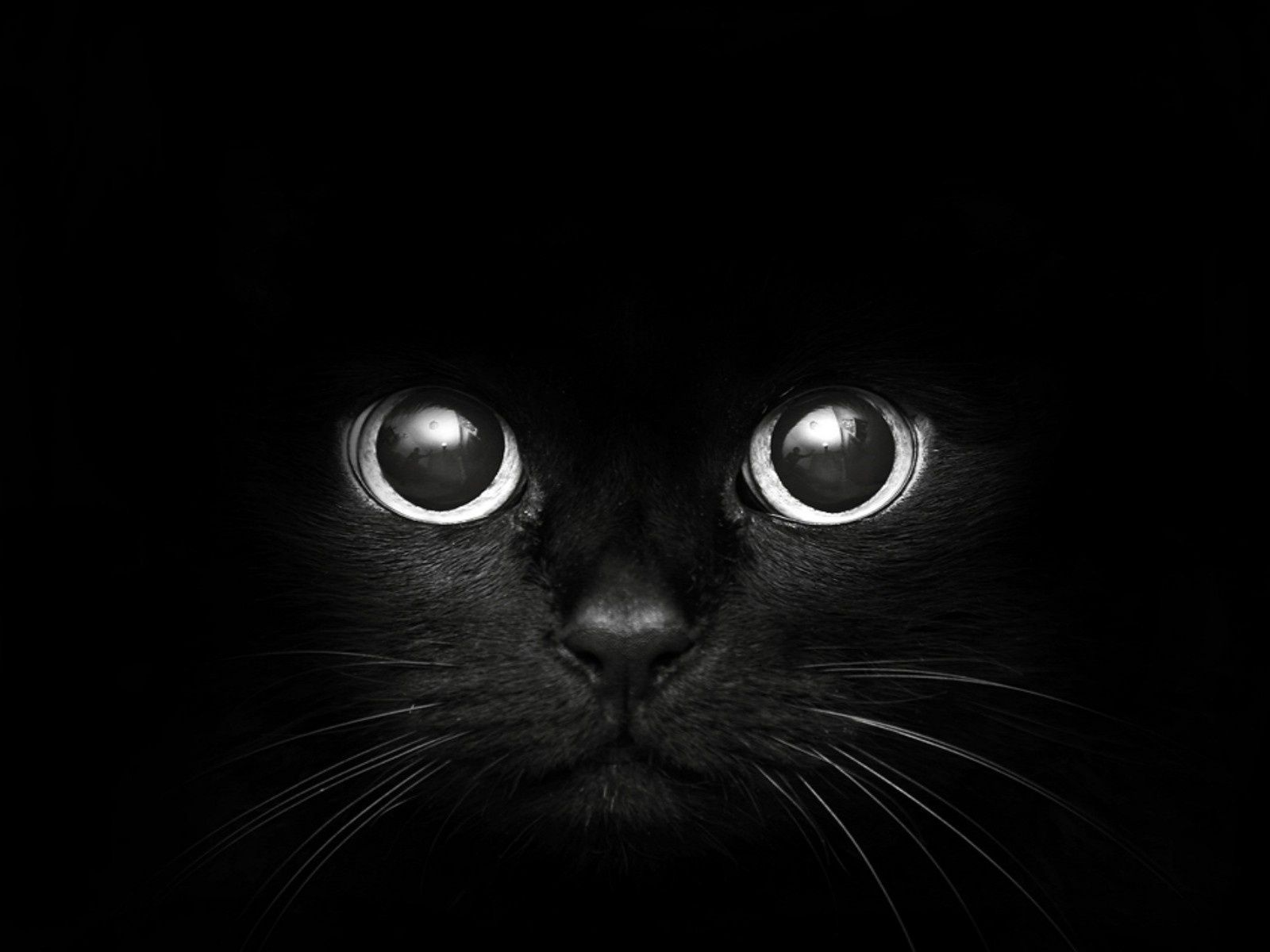 Cats Wallpapers Black Catblack Cat Hd Free Spot Cats Kittens