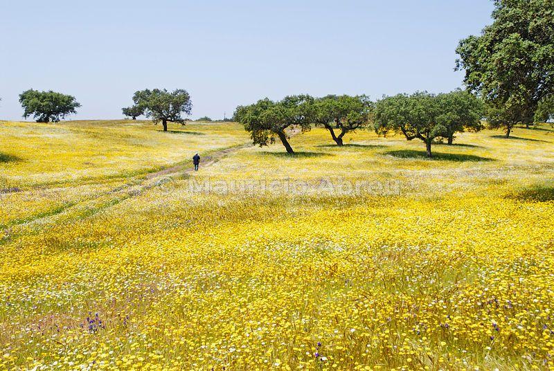 Spring In Alentejo Portugal Paisaje Increibles Fotografia