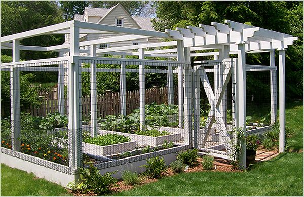 Gardens Wrapped in Netting Gardens Raised beds and Vegetables