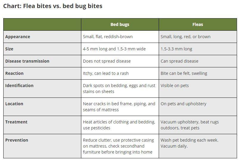Sand Flea Bites Vs Bed Bug Bites How To Get Rid Of Flea Bite Scars