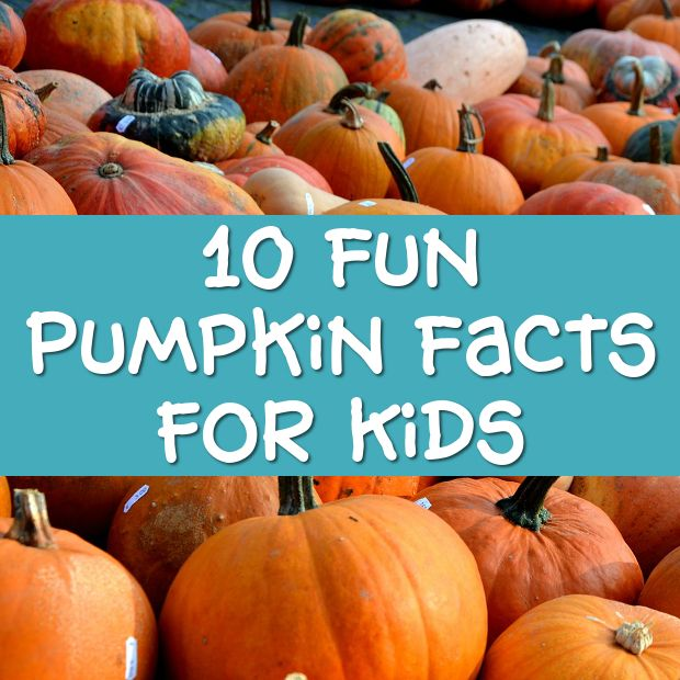 Pumpkin Facts For Kids Fun Trivia And Info Pumpkin Facts Facts For Kids Fun Pumpkins