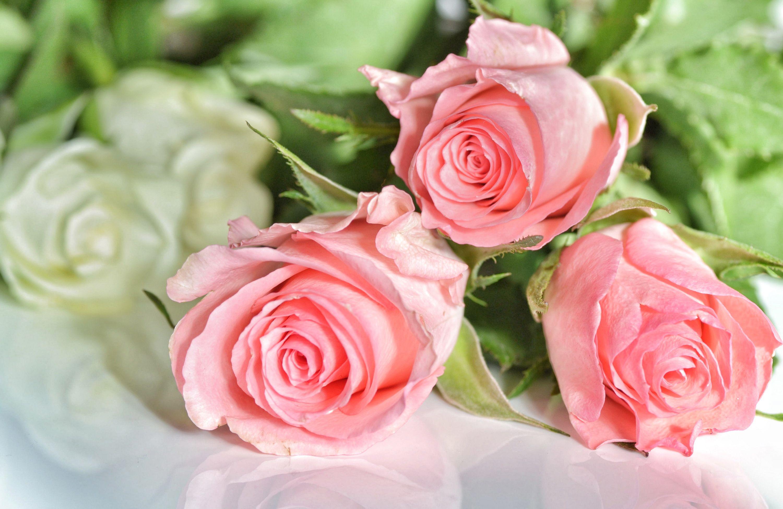 Картинки, открытка три розы