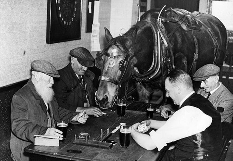 HESTEN SAM ER STAMGJEST Kullhandleren Jack Fowler tar seg gjerne en pint og et slag domino med guttene på puben i Bedford. Og hans trofaste hest Sam er naturligvis med. Hester er kjent for å være glade i øl – og i flere britiske puber er det fortsatt tillatt å ha med hesten. Tidligere dukket Blakken ofte opp der fordi den enkleste veien til stallen i bak-gården gikk gjennom skjenkestuen. Bedford, England 1937