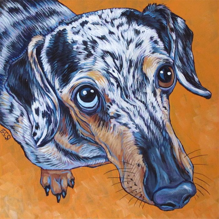 Smokey The Miniature Dapple Dachshund Dog Custom Pet Portrait