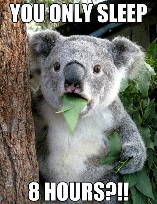Details about Funny Koala Bear Refrigerator / Tool Box ...  Funny Koala Memes