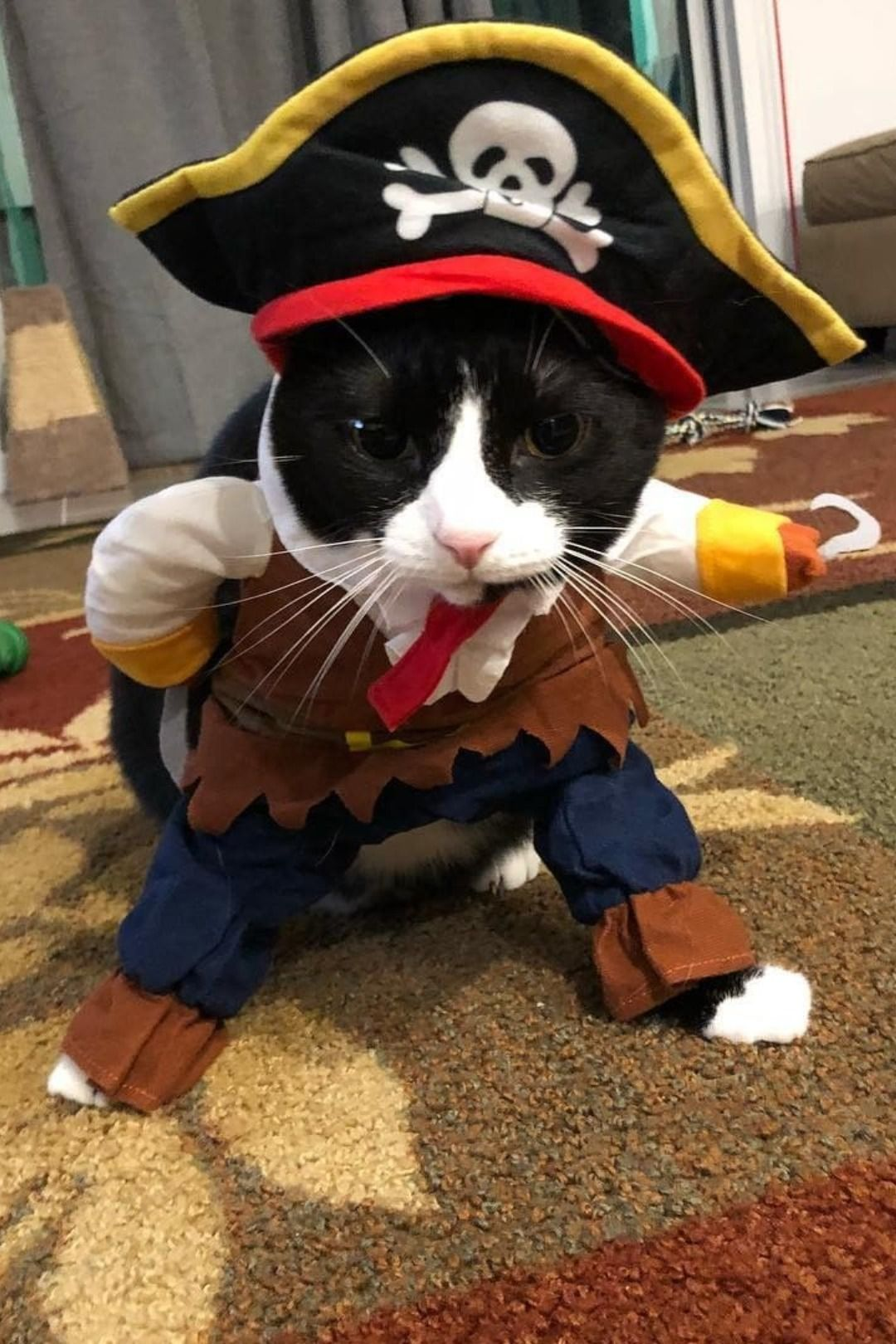 Funny cat dressed up in a pirate costume for Halloween