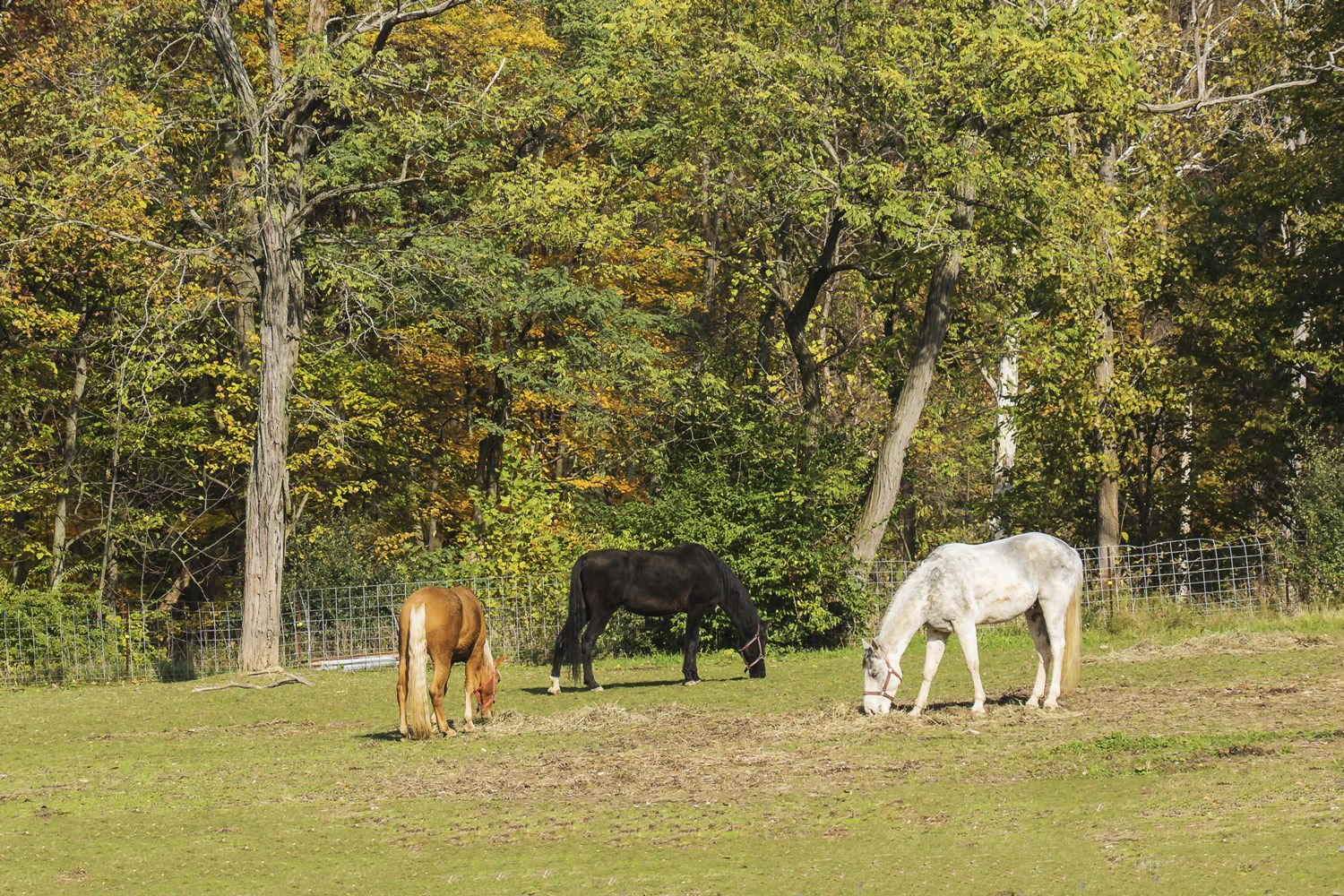 Sugars and Fructans in Horse Forages