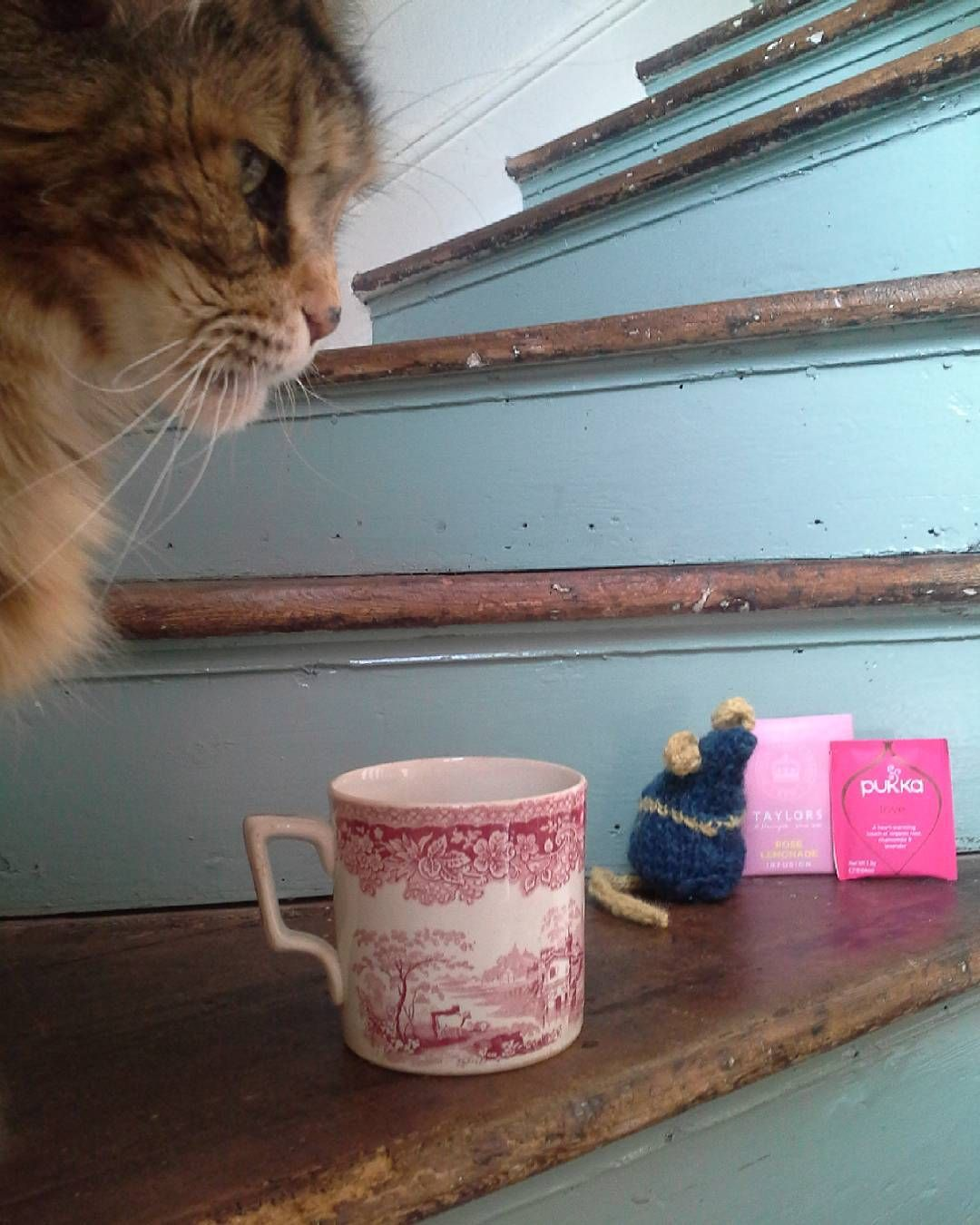Always time for tea x from the cat  the mice  the sea and me x