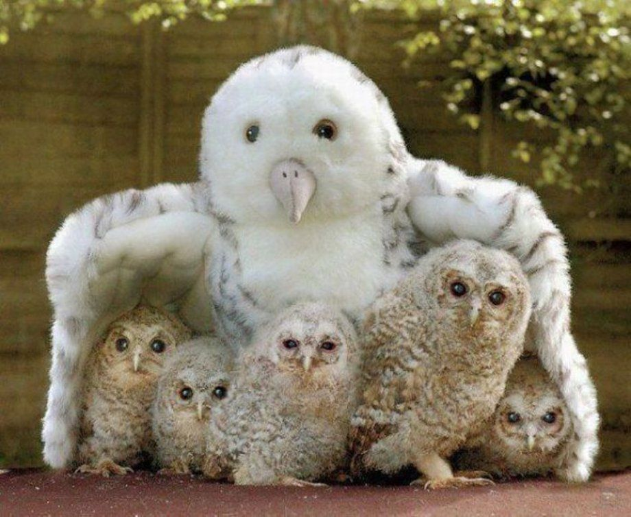 Totally cute they must have lost their mother. Good thing the stuffed owl is there, it seems to be comforting them.