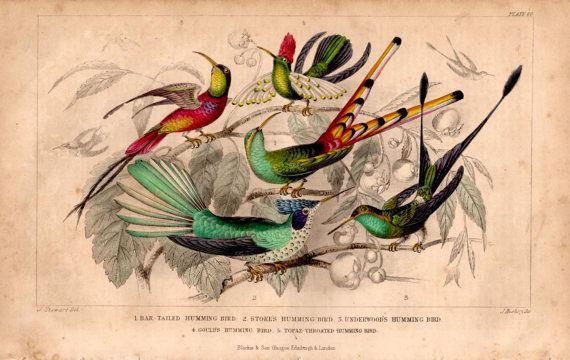 Rare Antique Humming Bird Species Original by TheLotAntiquesandArt