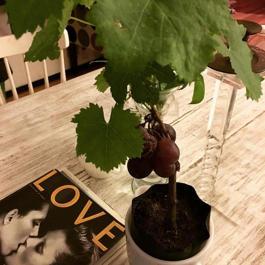 #love and #vines