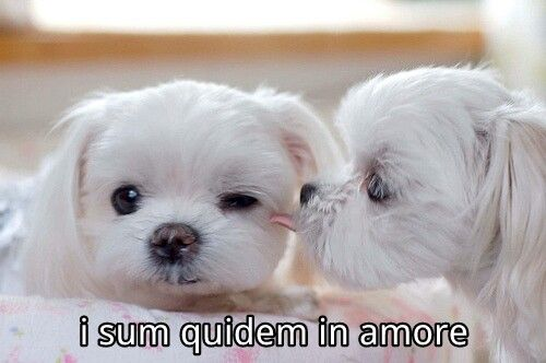 i sum quidem in amore. Pin'd from android: http://pind.feigdev.com