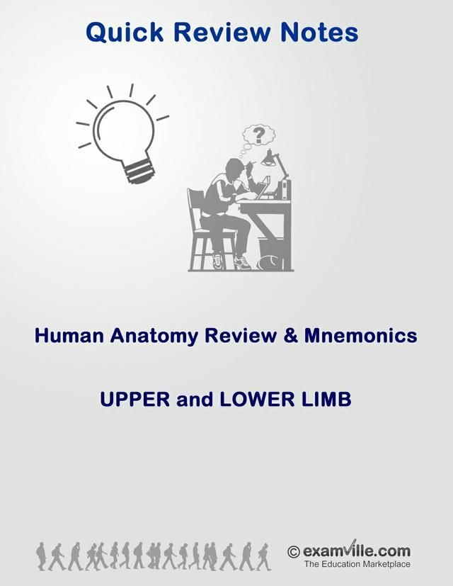 Anatomy Review and Mnemonics - Upper and Lower Limbs | Nursing ...