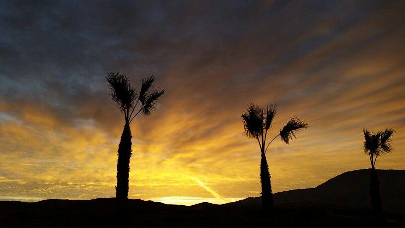 Palm trees yellow sky