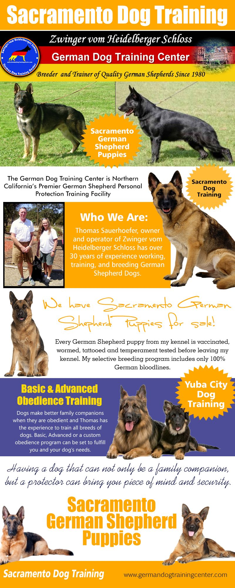 Vinnie Malinois Police K9 For Sale Guard Dogs For Sale Belgian