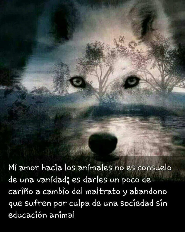 Mi Amor Hacia Los Animales Activista Por Los Derechos Animales