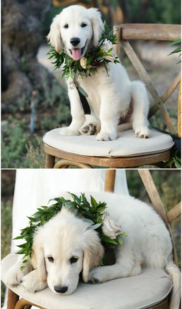 Save Big On Flowers With The Biggest Wedding Trend Of 2017 Wedding Pets Dog Wedding Puppy Wedding