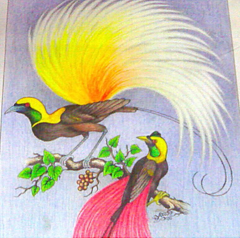 80 Gambar Burung Cendrawasih Di Papua Gratis Terbaik