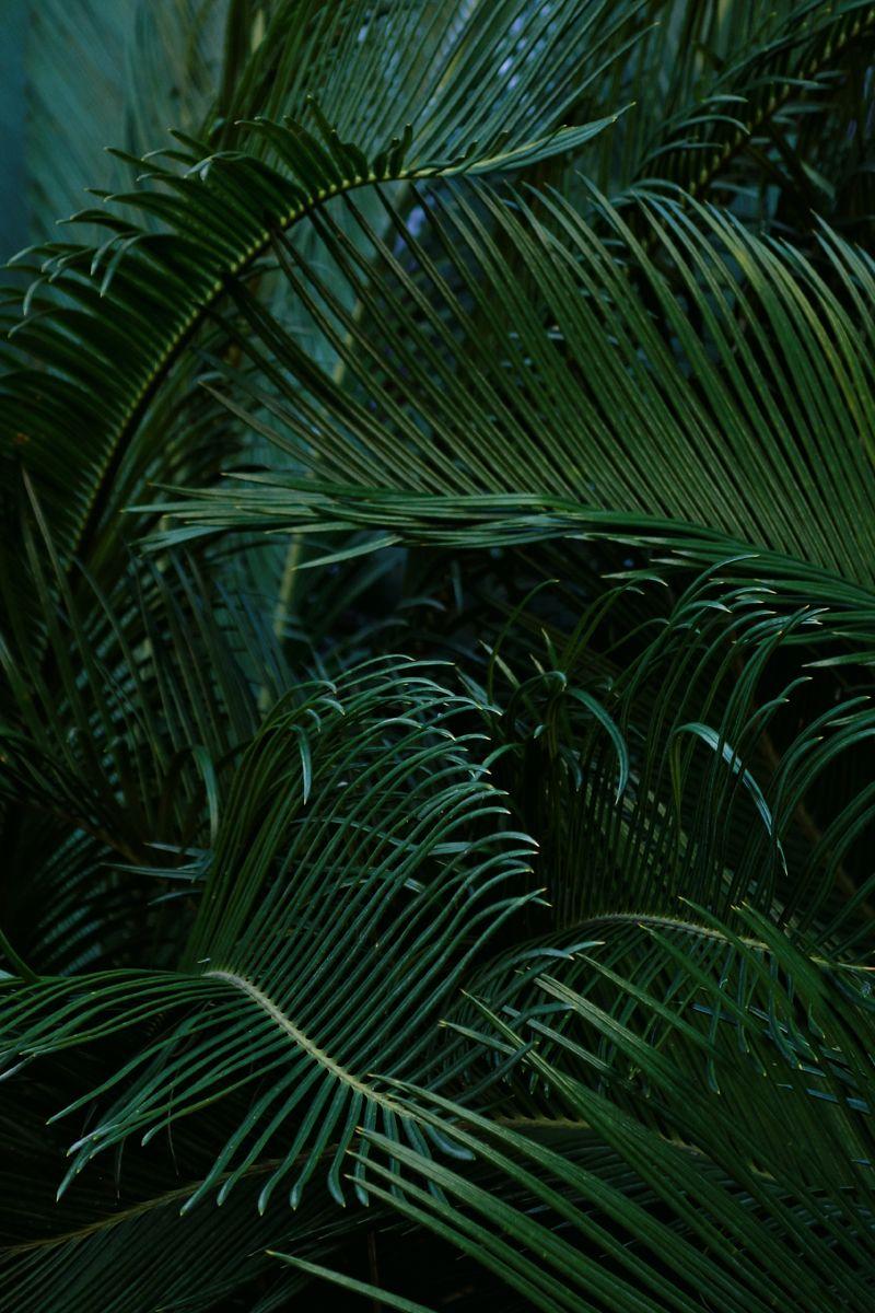 dark and moody tropical surfacedesign emeraldgreen