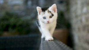 Cat Hd Desktop Background Cute Cat Wallpaper Kitten Wallpaper Kittens Cutest
