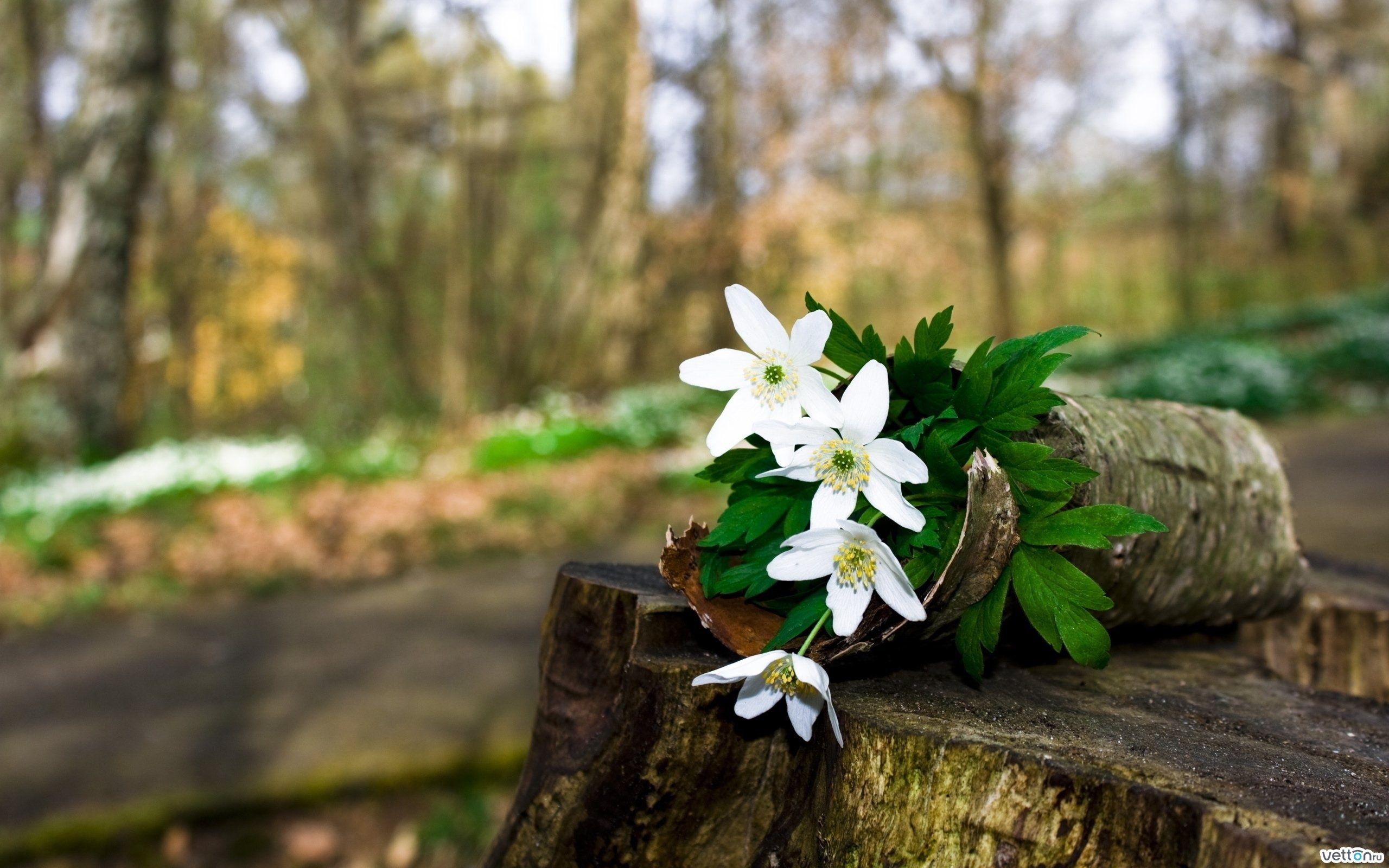 Fondos De Pantalla Hd Flores: Fondos De Flores Silvestres Para Fondo De Pantalla En 4K