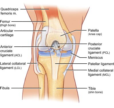 left knee joint diagram google search