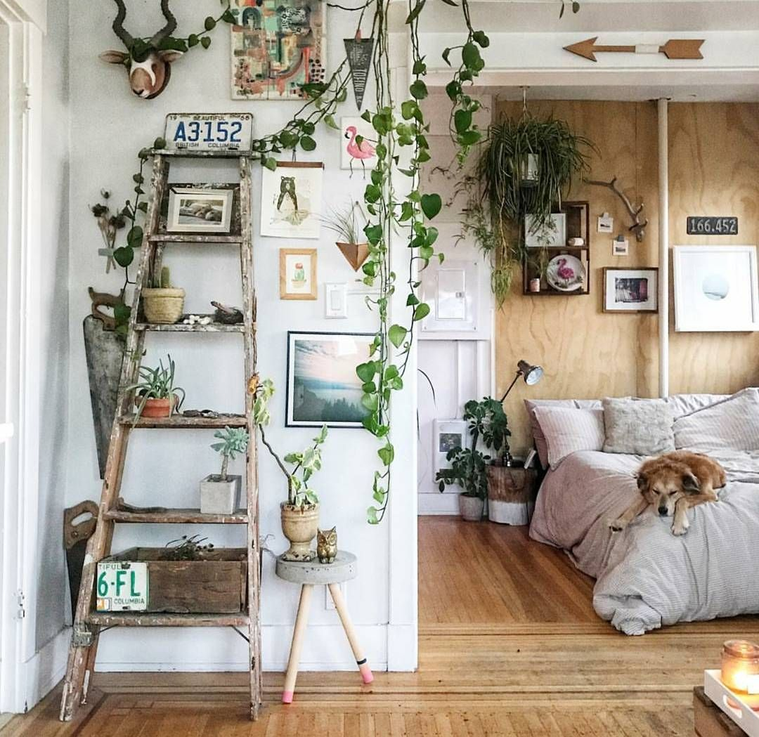 How To Take Insta Worthy Photos Of Your House Plants