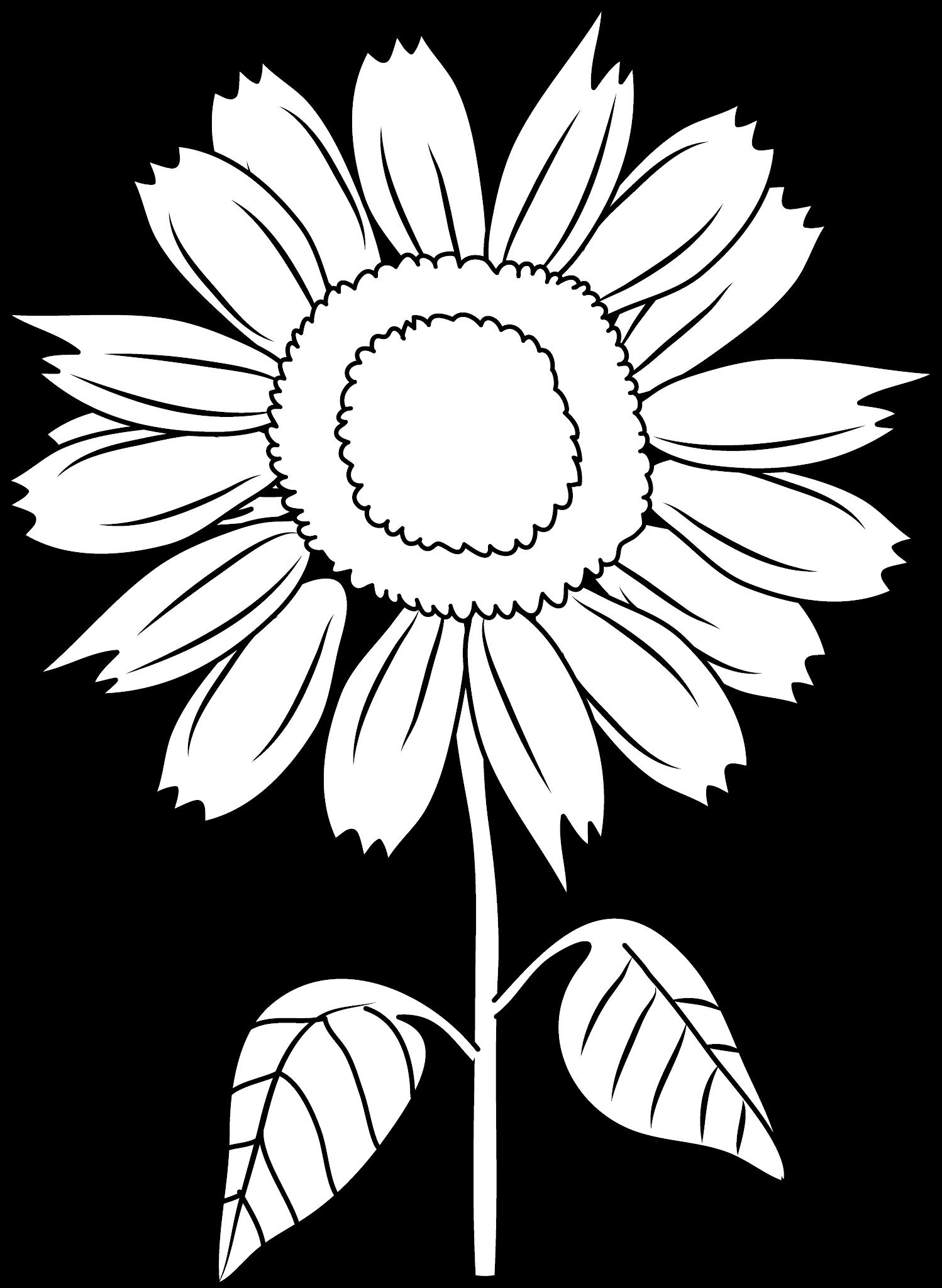 Common Sunflower Vector Sunflower Images Gallery Sunflower Coloring Pages Flower Coloring Pages Flower Drawing
