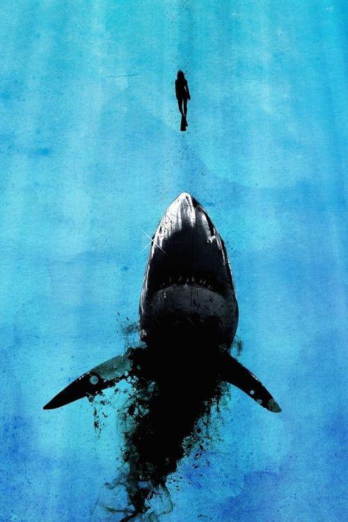 Zan Zan Sharks Sfondi Scrivania Sfondi Hd E Sfondi