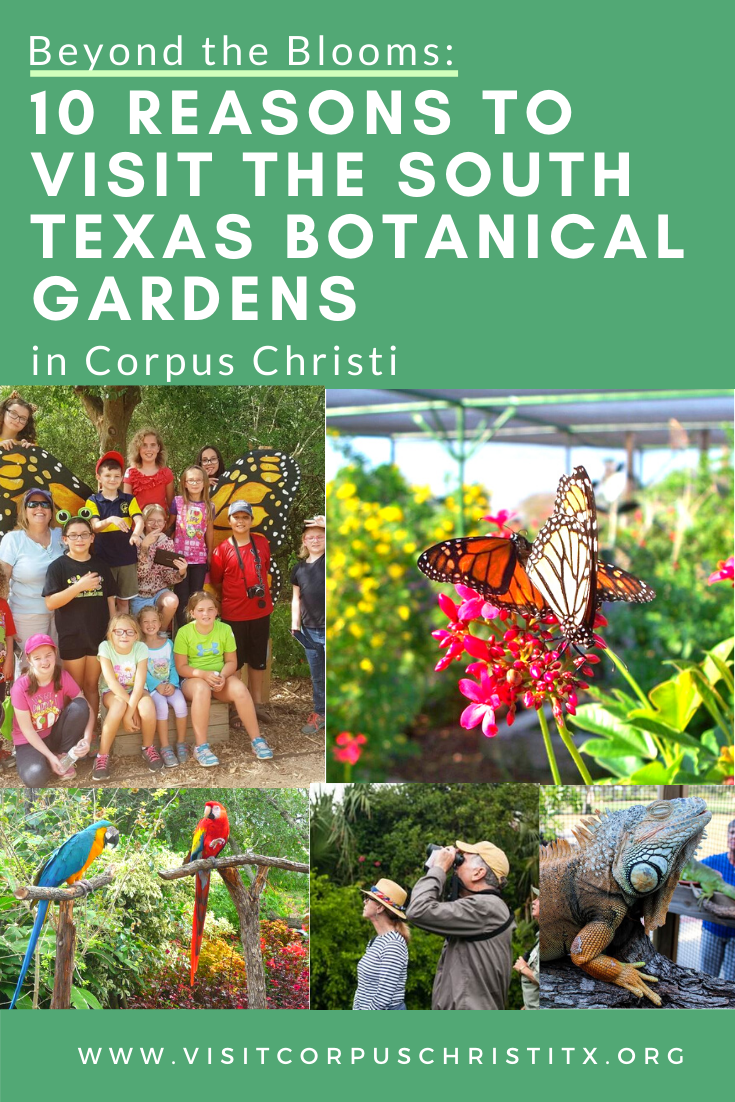 Beyond the Blooms 10 Reasons to Visit the South Texas