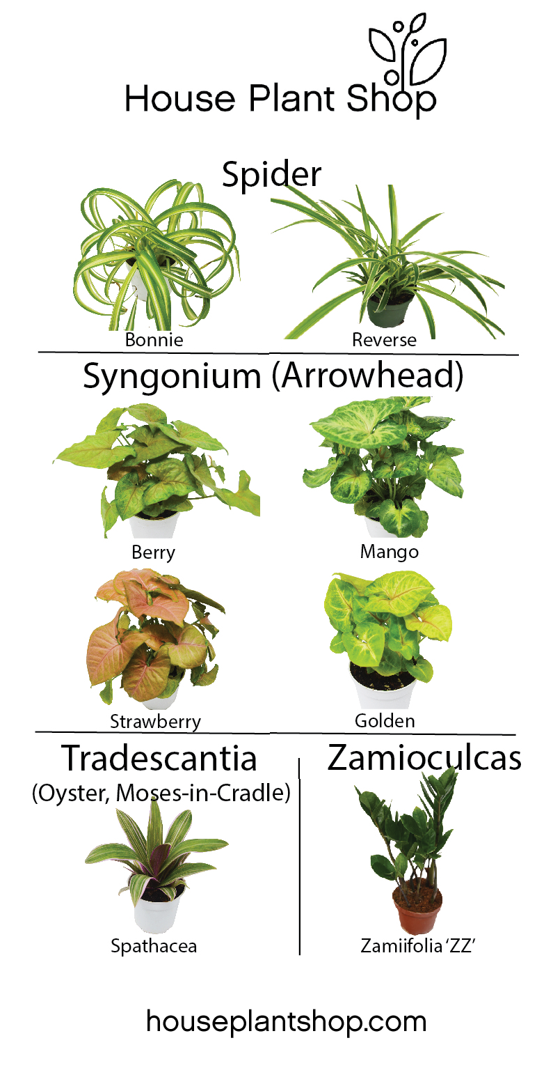 From arrowhead plants zz plants oyster plants to spider plants
