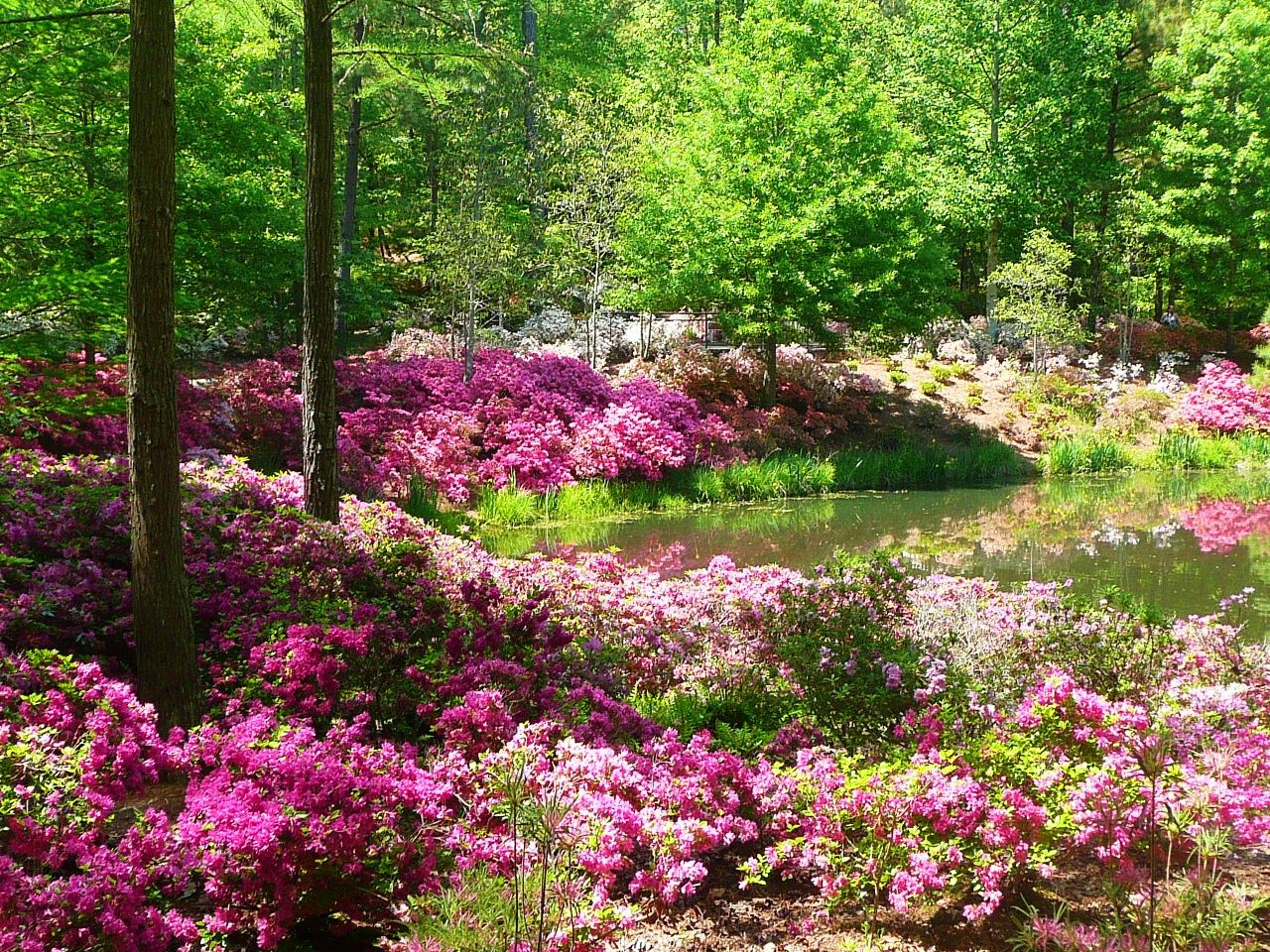 Callaway Gardens Pine Mountain Ga Where The Flowers Grow Pinterest Road Trips And