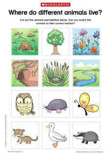 Where Do Different Animals Live Animal Habitats Preschool Animal Habitats Habitats